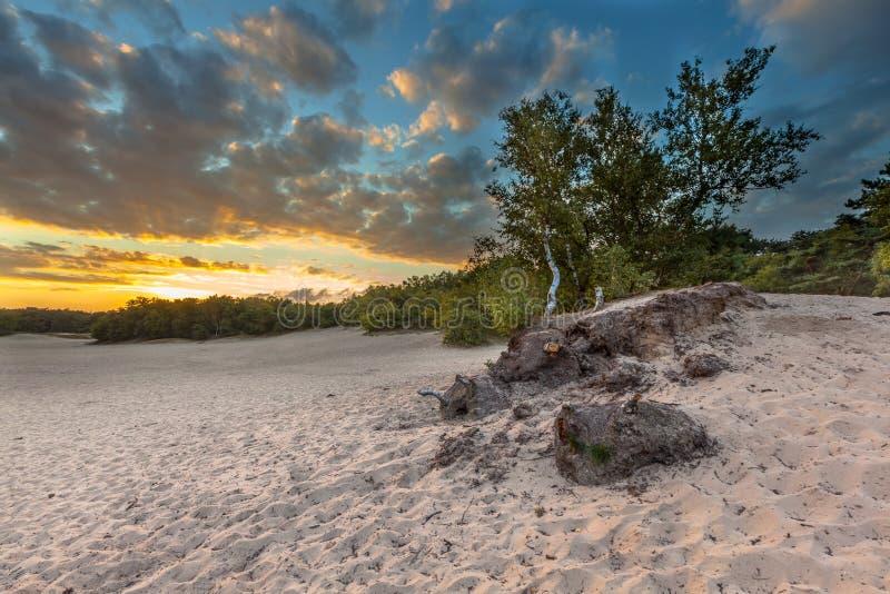 Duinen met het verplaatsen van Zand stock foto