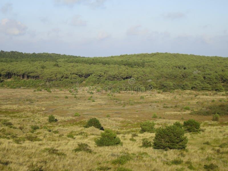Duinen op Vlieland, dyn på Vlieland arkivbilder