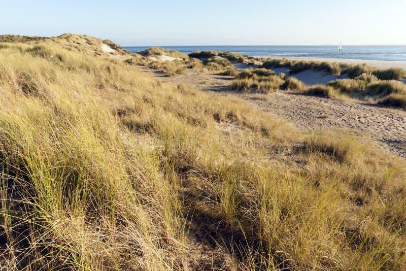 Duinen op Vlieland, dyn på Vlieland arkivfoto