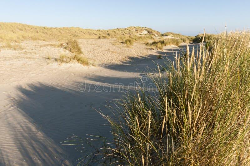 Duinen op Vlieland, dyn på Vlieland royaltyfri fotografi