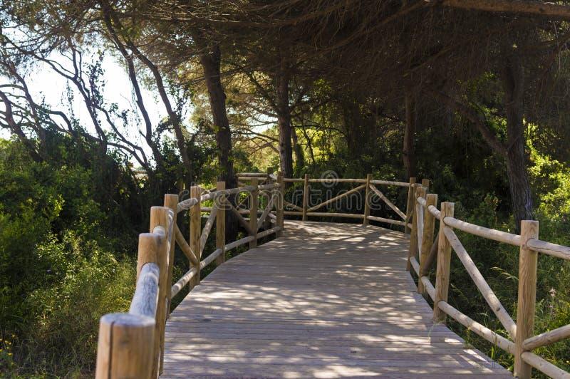 Duinen van artola natuurlijke die reserve in Cabopino Marbella Costa del Sol Malaga Spain wordt gevestigd royalty-vrije stock foto
