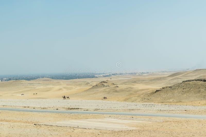 Duinen van de Woestijn en de kamelen van de Sahara royalty-vrije stock fotografie