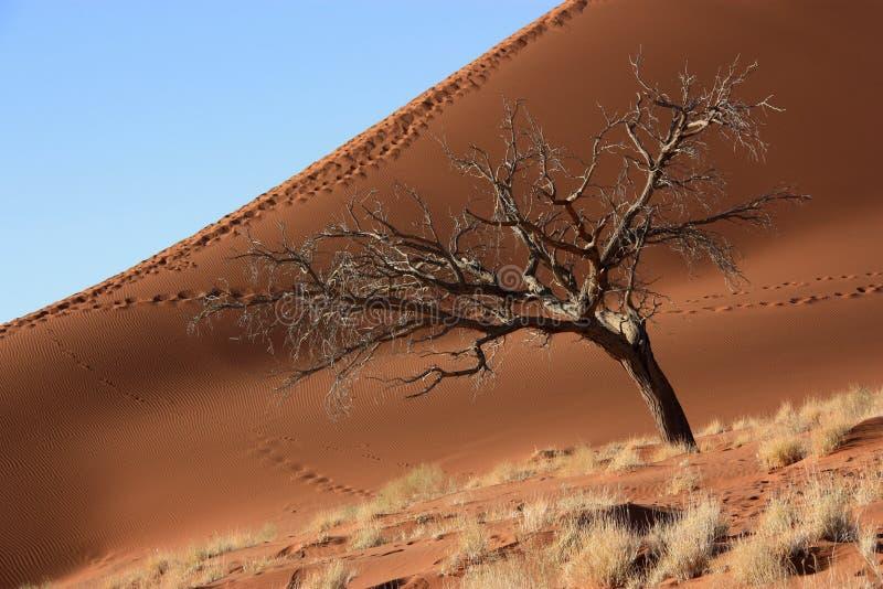 Duinen van Namibië stock fotografie