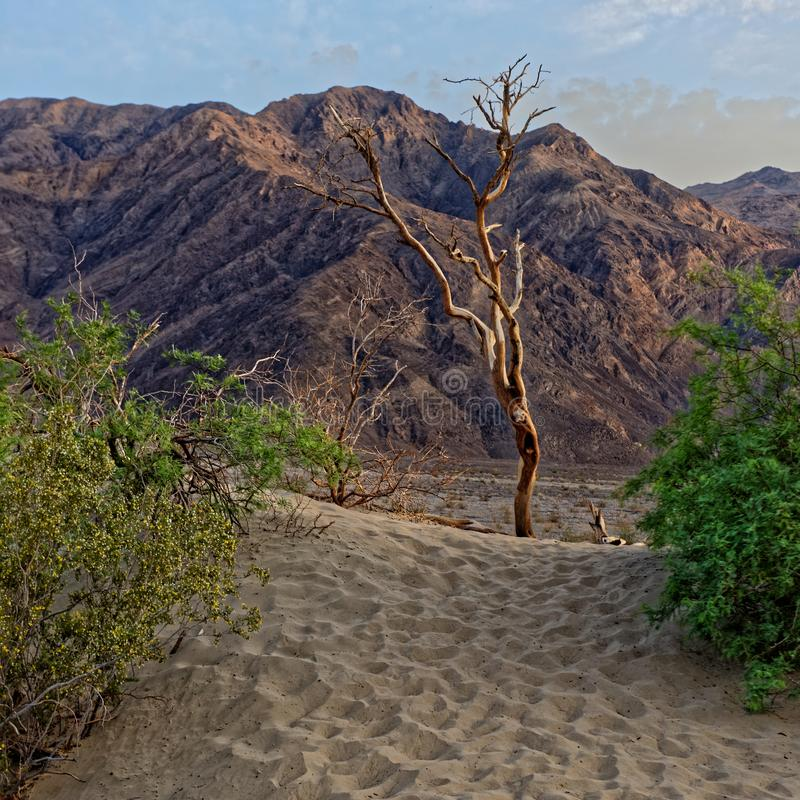 Duinlandschap, Doodsvallei, Californië stock foto's
