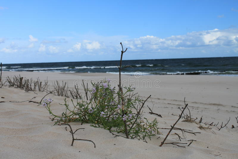 Duinlandschap van de Oostzee, Hel, Polen royalty-vrije stock afbeelding