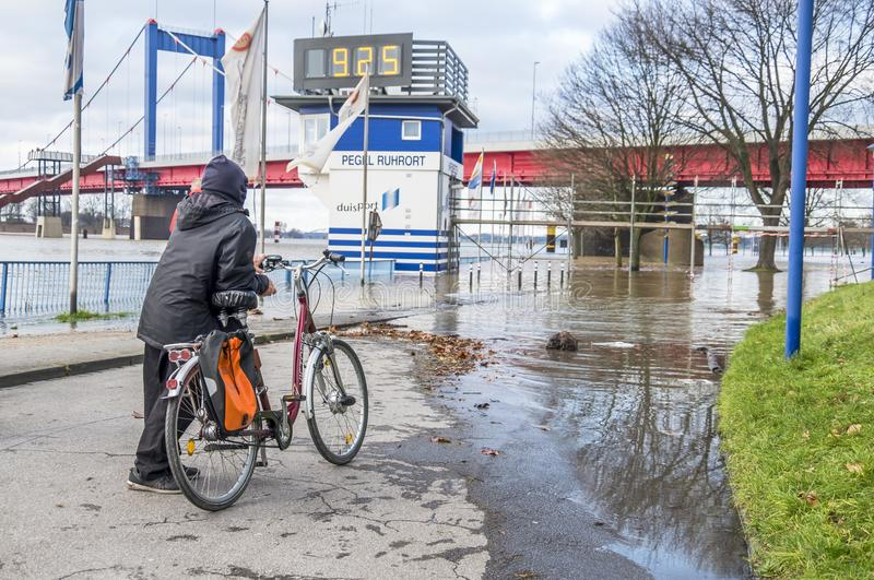Duisburg Germany - January 08 2017 : Bike driver surprised by the river Rhine flooding the promenade. In Ruhrort stock photo