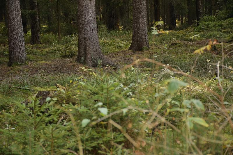 Duits herfstbos dichtbij Schirnding-dorp binnen op 6 Oktober 2018 royalty-vrije stock foto