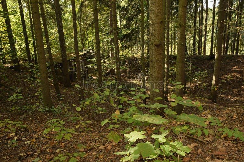 Duits herfstbos met houten plattelandshuisje dichtbij Schirnding-dorp binnen op 6 Oktober 2018 royalty-vrije stock foto's