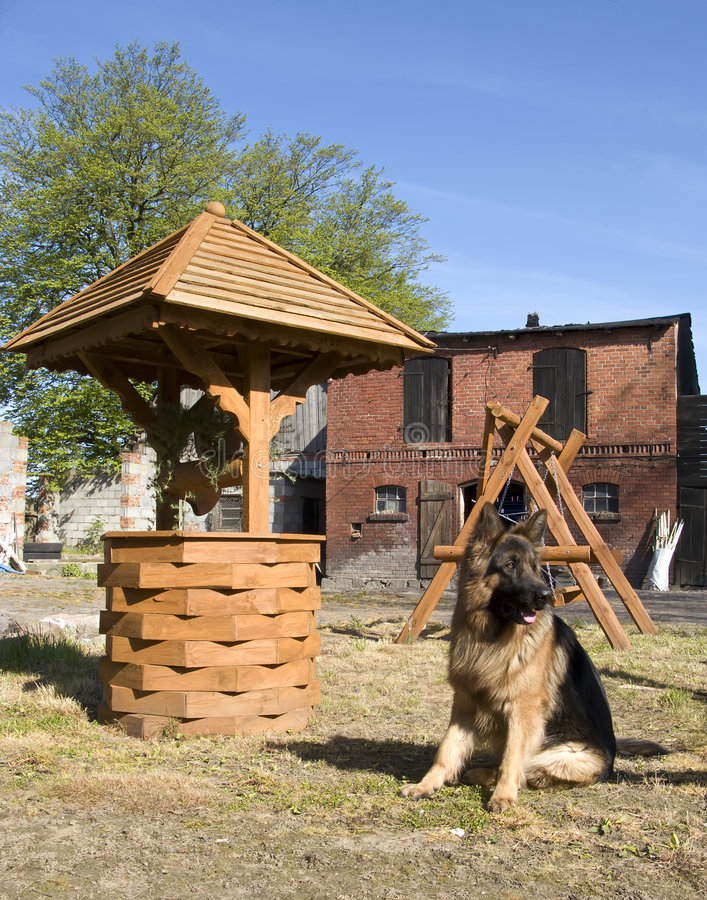Duitse herder en goed stock afbeeldingen