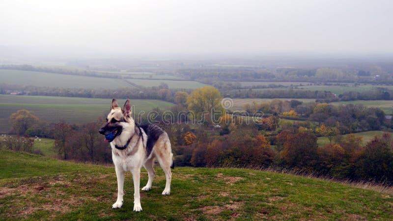Duitse herderhond met bal in het Engelse Platteland royalty-vrije stock fotografie