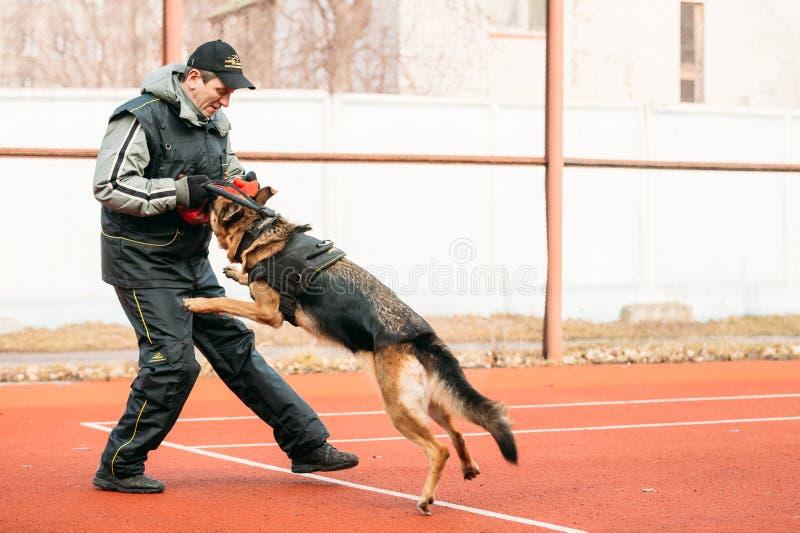 Duitse herderhond opleiding in Regionale Gomel royalty-vrije stock afbeeldingen