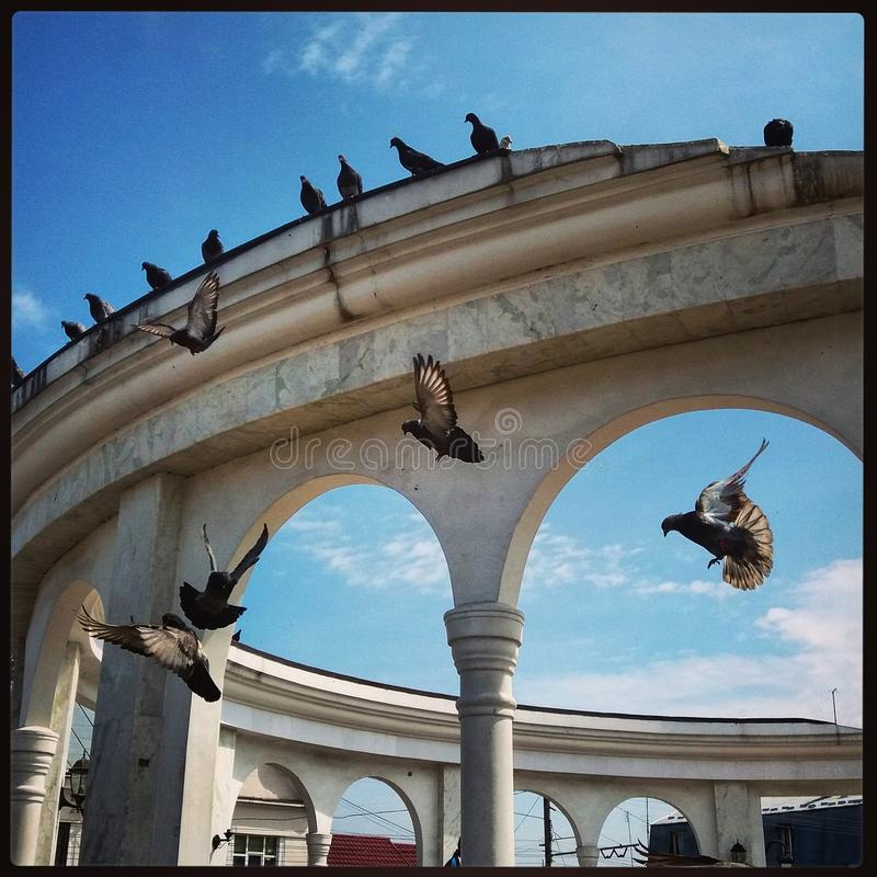 duiven stock foto's