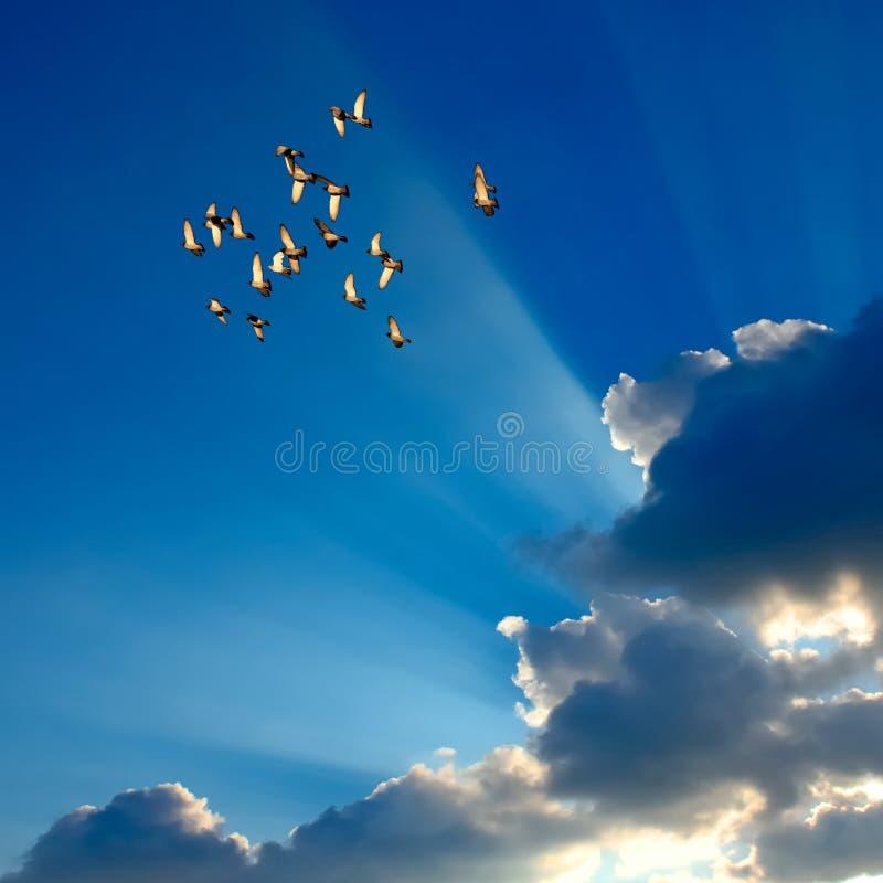 Duiven in de lucht