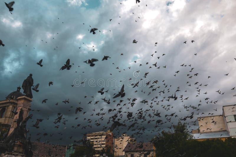Duiven die boven Plein Murillo in Bolivië vliegen royalty-vrije stock foto