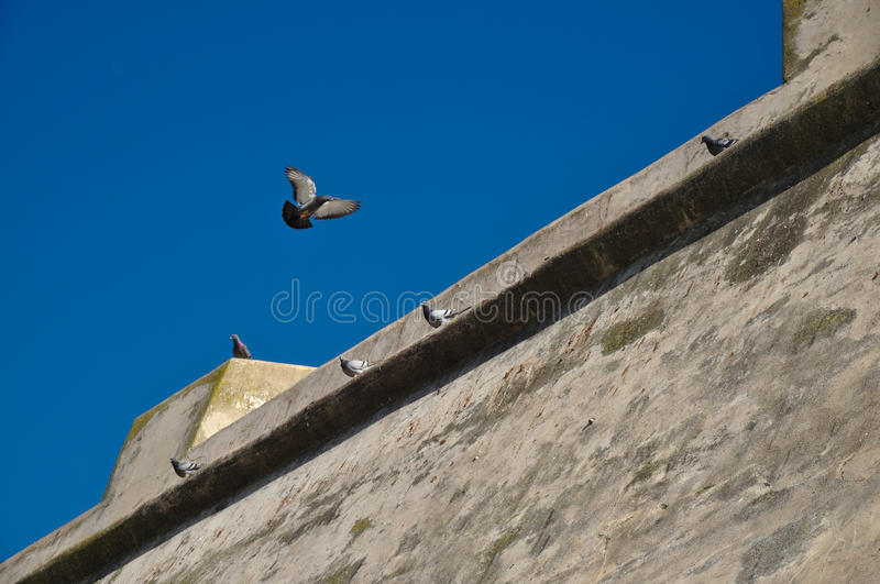 Duiven die voor de canonbatterij vliegen in Portugal stock afbeeldingen