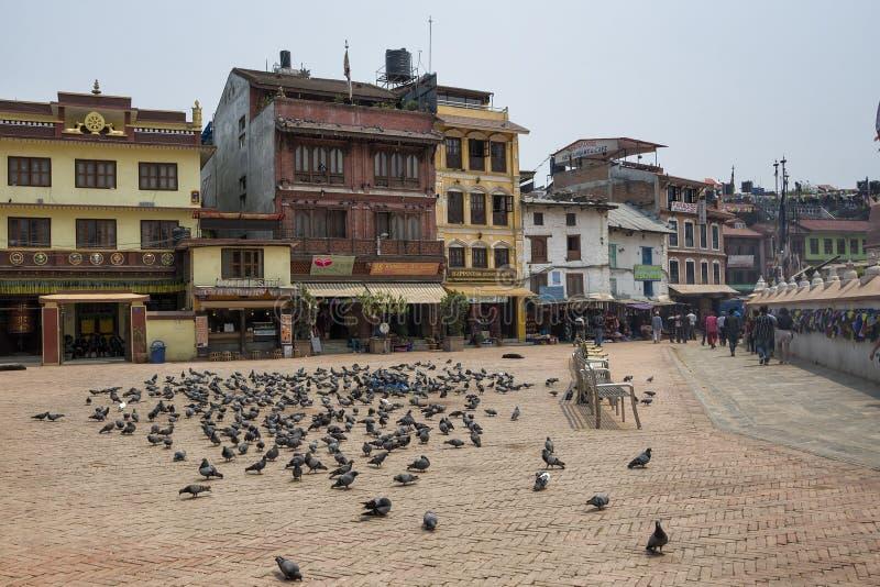 Duiven rond het beroemde aantrekkelijkheids Boeddhistische Heiligdom Boudhanath Stupa, Katmandu, Nepal royalty-vrije stock foto's