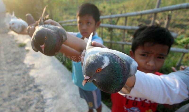 Duivenvogels stock afbeelding