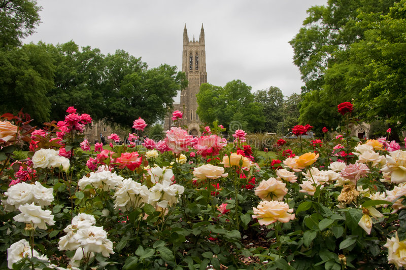 Download Duke Chapel stock photo. Image of university, building - 7450320
