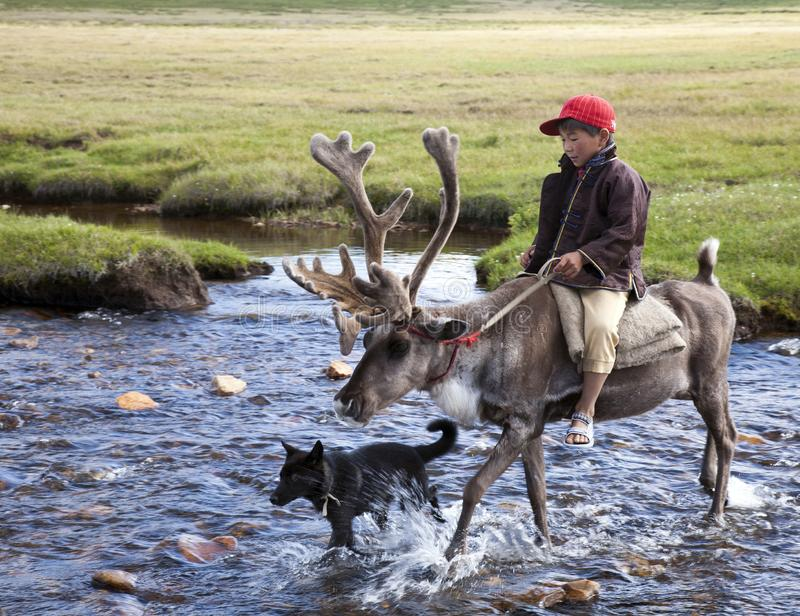 Dukha Boy rides reindeer across river with dog stock photography