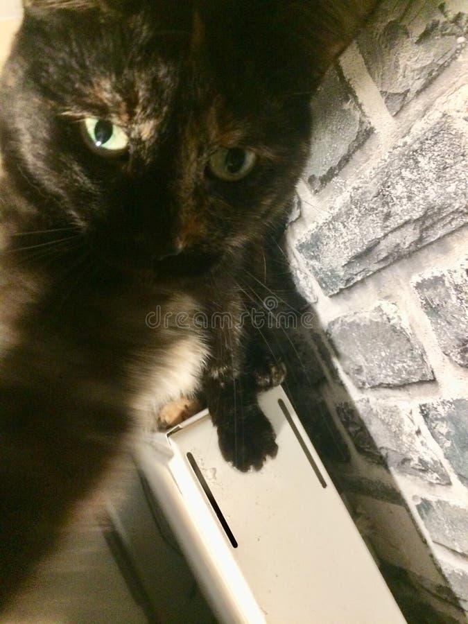 Dulce del gato de Selfie fotografía de archivo