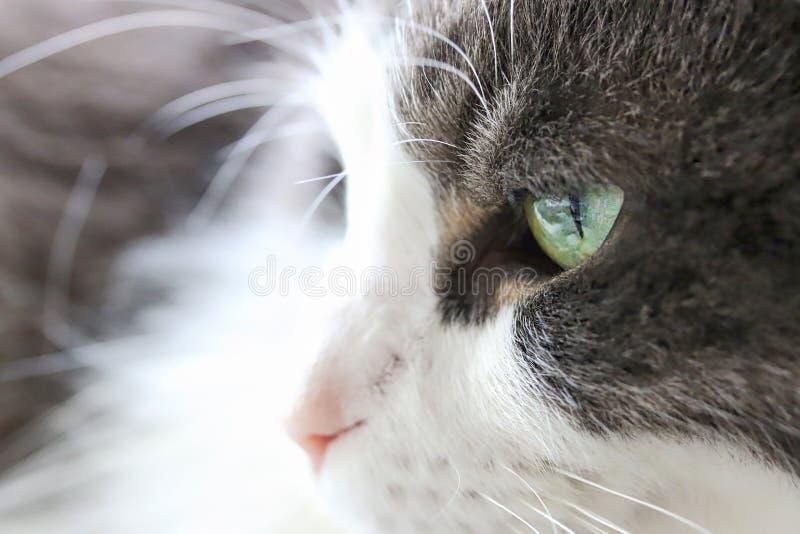 Dull Looking Cat stock afbeeldingen