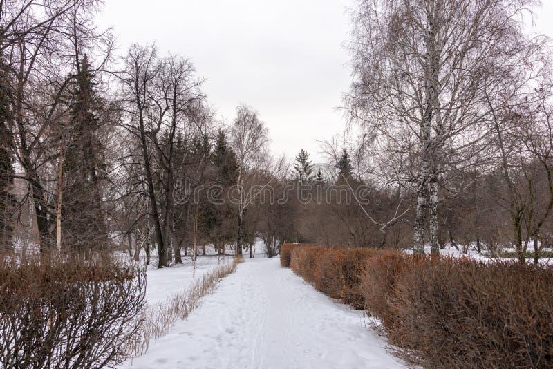 Dull Winter Park op een bewolkte dag stock fotografie