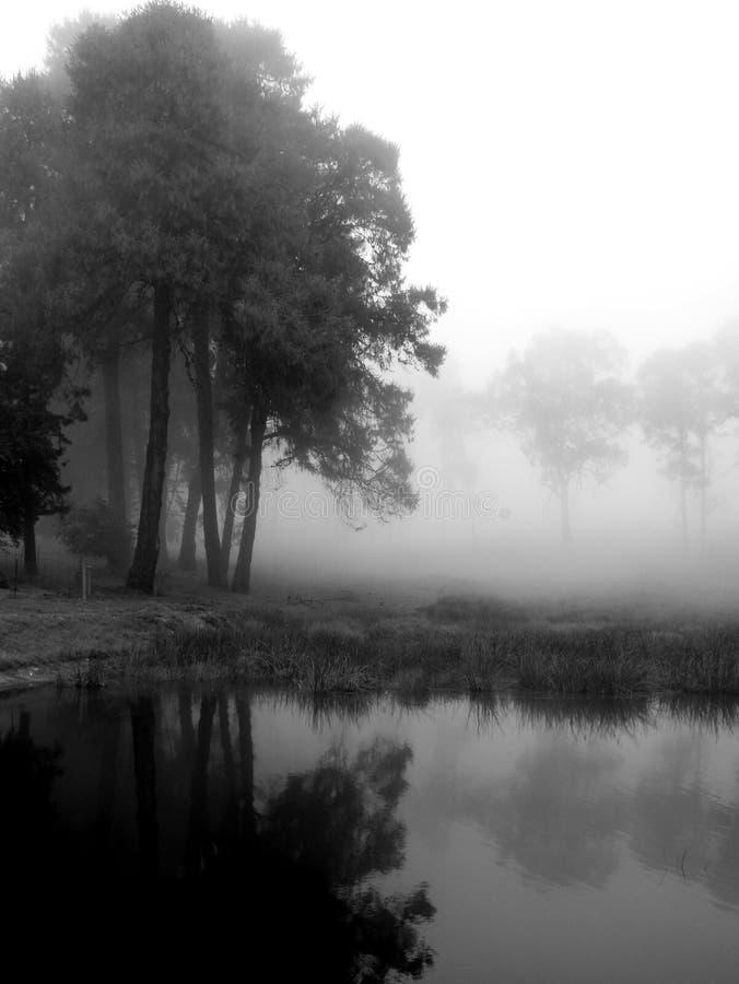 Dullstroom-Forellensee im Nebel (Schwarzweiss) lizenzfreie stockfotografie