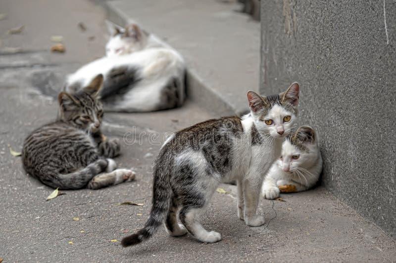 Duma przybłąkani koty zdjęcia stock