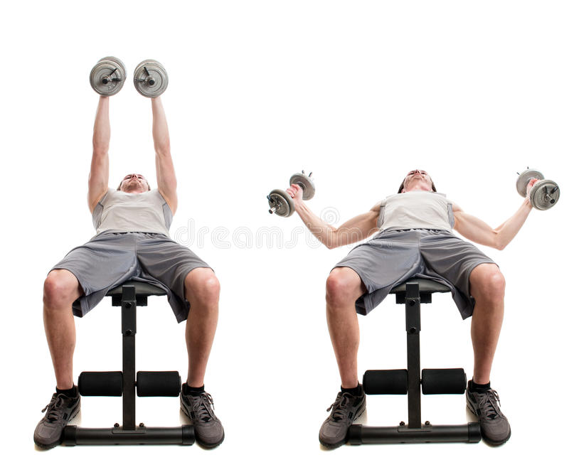 Dumbbell Fly royalty free stock image