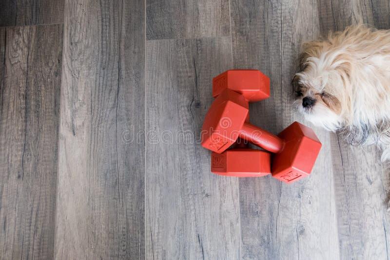 Dumbell et chien photo libre de droits