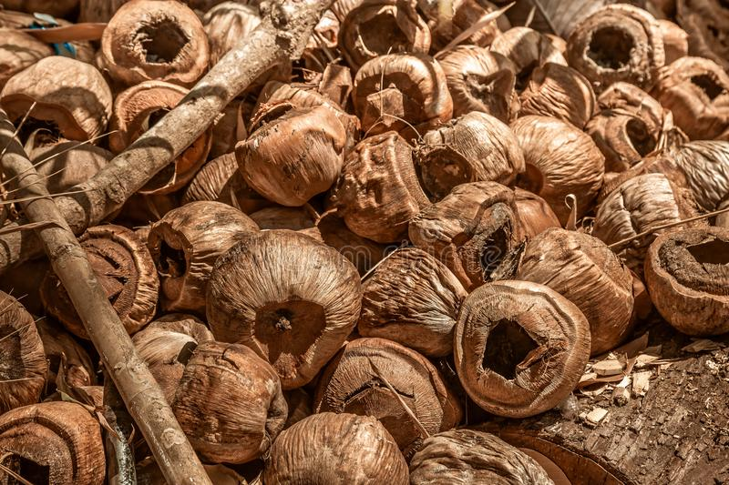 Dump old dry coconuts, the queue to burn. Recycling Organic Garbage. Close-up, brown tones. Natural textures. Empty waste coconuts stock image