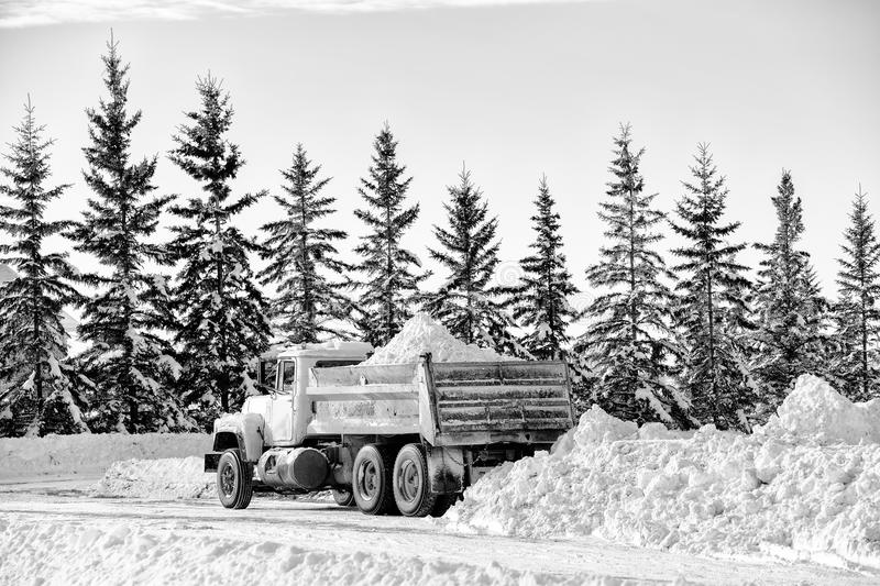 Dump truck with load of snow. A gravel truck backed and ready to dump load of snow from the box behind a row of spruce trees in a black and white winter royalty free stock image