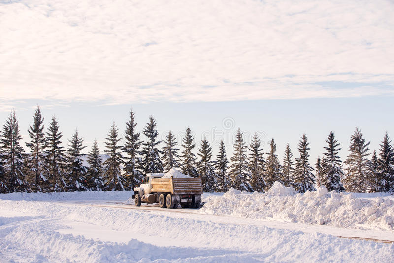 Dump truck with load of snow. A gravel truck backed and ready to dump load of snow from the box behind a row of spruce trees in a winter landscape stock images