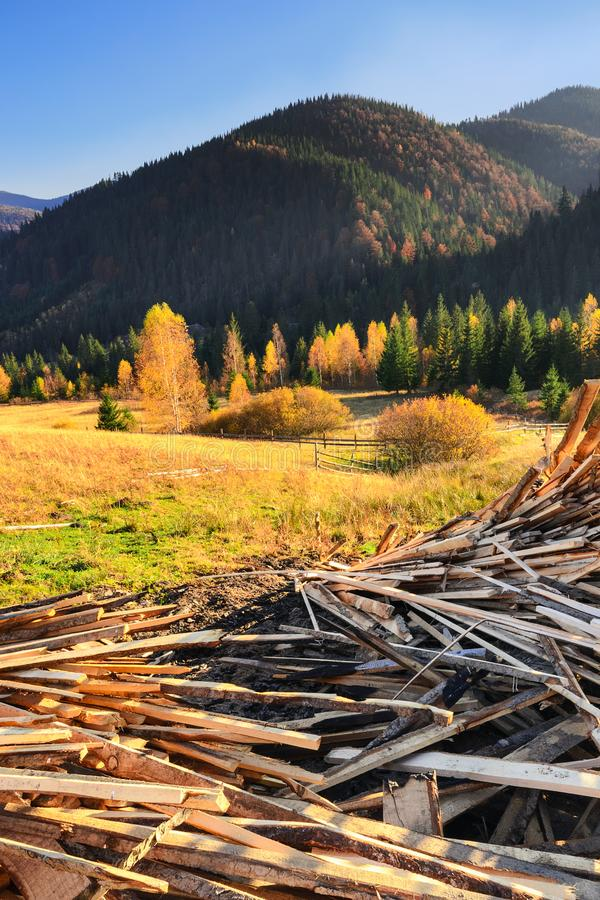 Dump of wood waste against a beautiful forest in the golden rays of the setting sun I stock photos