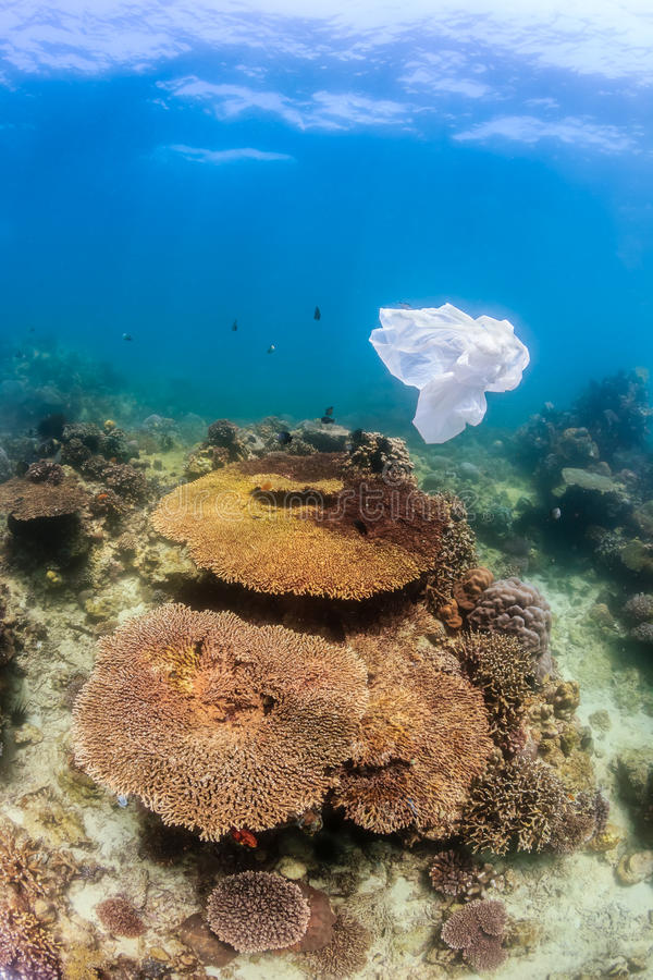 Download Dumped Plastic Bag Floating Next To A Coral Reef Stock Photo - Image of floating, drifting: 42297310