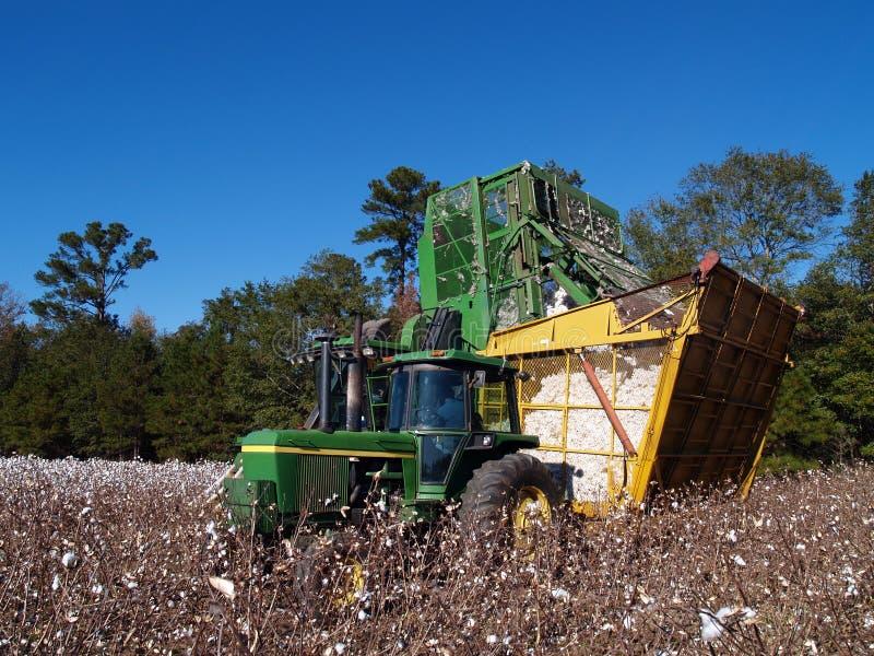 Dumping de récolteuse de coton photos libres de droits