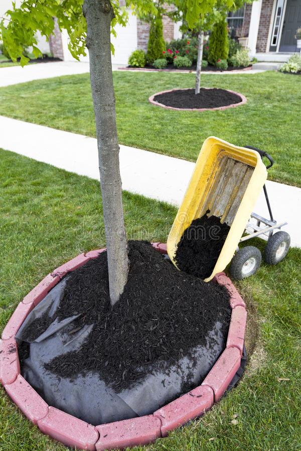 Dumping Mulch. Around the trees and shrubs, yard maintenance is fun. Weed barriers are very useful royalty free stock images