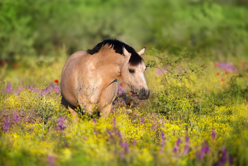 Dun ponny i blommor arkivbild