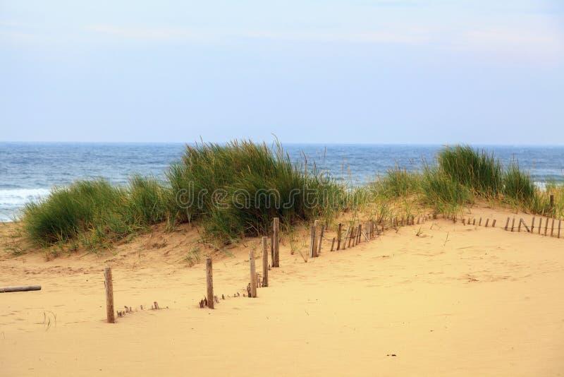 Duna de areia com arbustos da grama fotografia de stock royalty free