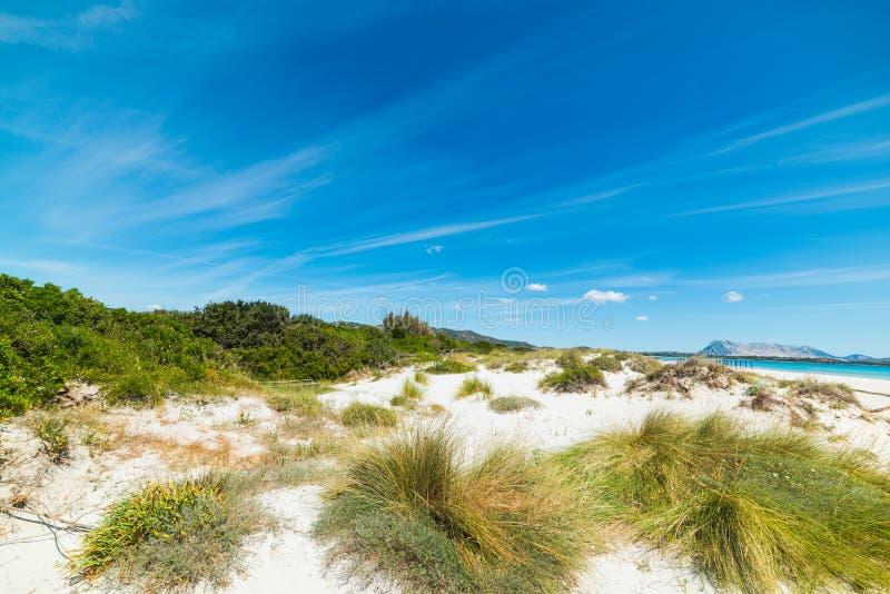 Duna de areia na praia de Cinta do La imagem de stock royalty free