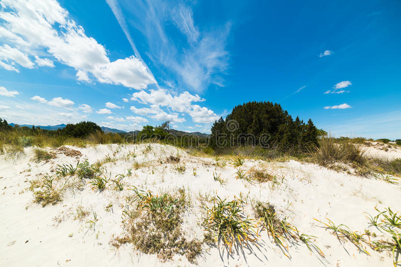 Duna de areia na praia de Cinta do La fotografia de stock royalty free