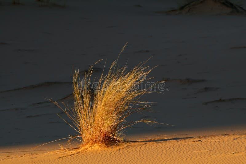 Duna de arena con la hierba fotografía de archivo