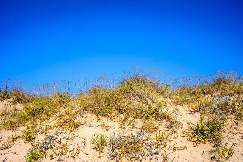 Duna de arena con su vegetación preservada en Lanzada, España imágenes de archivo libres de regalías