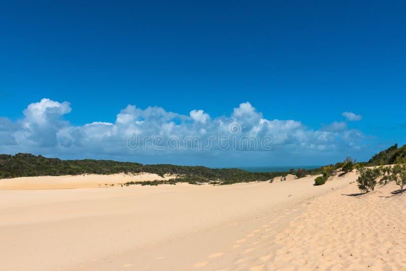 Duna de arena del desierto de Fraser Island en Australia imagenes de archivo