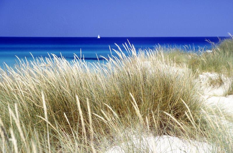 Duna de arena en la playa fotografía de archivo libre de regalías