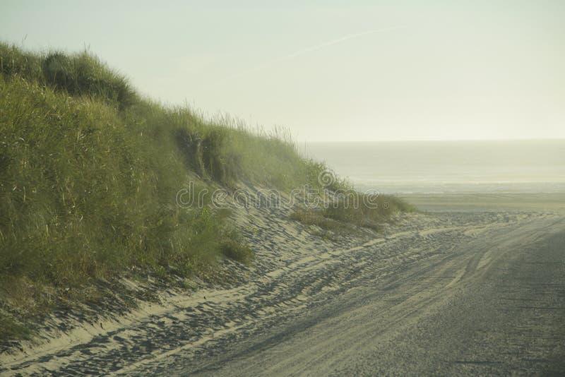 Duna de arena herbosa en la playa imagen de archivo libre de regalías