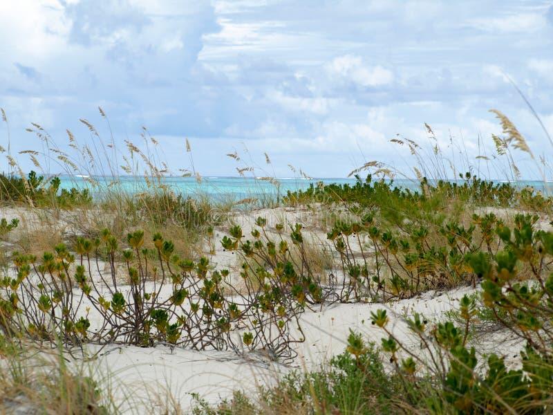 Duna de arena por el océano meridional fotografía de archivo