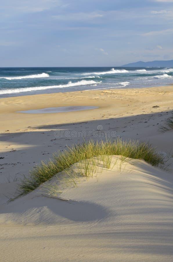 Duna de arena, sombras y mar, costa este, Tasmania fotos de archivo libres de regalías
