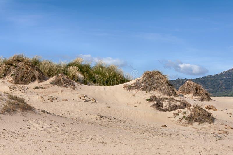 Duna de arena de Valdevaqueros en la costa este de Tarifa, Andalucía imagen de archivo