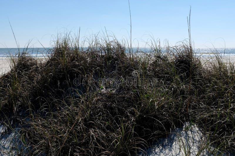 Duna di sabbia con l'erba della duna fotografia stock libera da diritti